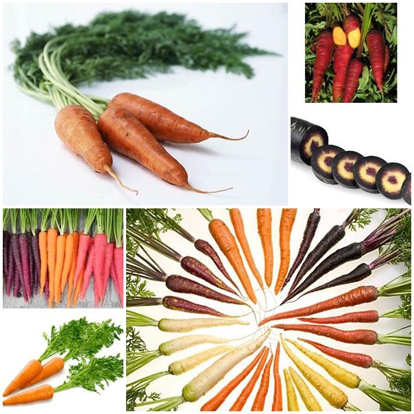 varietati de morcov